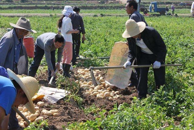 土豆种植有门道!注意这些田间管理技巧,不愁产wps2013教程使用图片