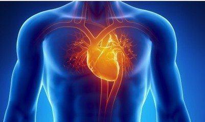 在未来,我们或许有机会让心脏再生