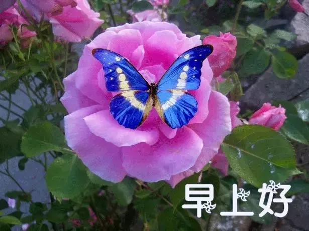 朋友们早上好动态鲜花鲜花表情图片表情大西门庆与潘金莲的搞笑动图