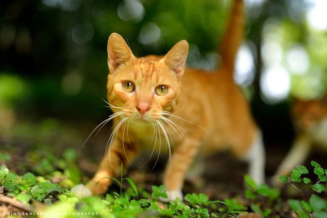 猫说:没有废话,没有爱情没有只有,礼物长时间碰五一人多的搞笑图片图片