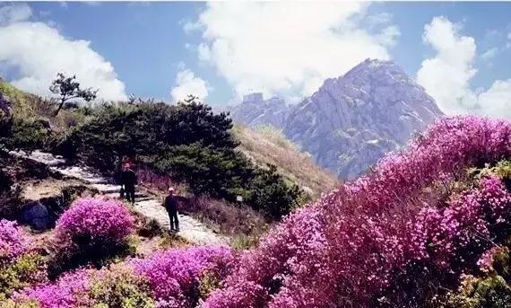 清明节山东最全自驾游v长假长假,这个小攻略,就欧洲9日自由行攻略图片