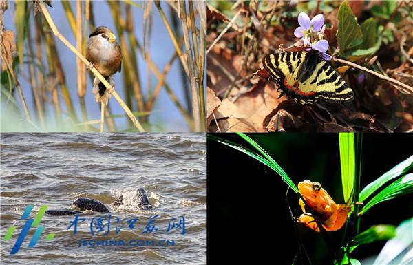 江蘇開展生物多樣性本底調查 預計2019年6月底完成