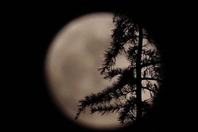 2018漫画一天出现狼月,超级月亮再次刷屏了前龙马越部景迹吾年第图片