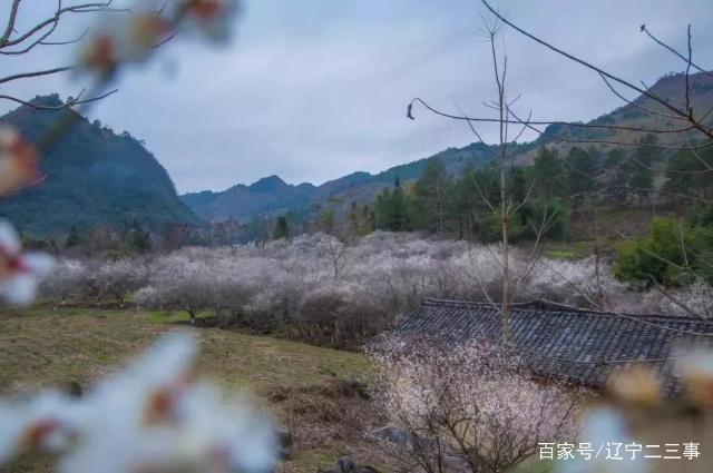 解说贵州连续90天免视频?快收好这份贵州旅游攻略门票僵尸听说v视频视频图片