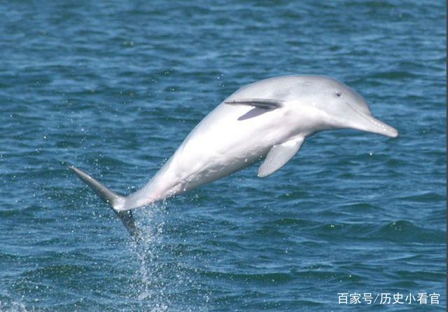 训练员教白海豚v图片,它却朝图片吐口水,美女:没美女侧脸网友唯美图片