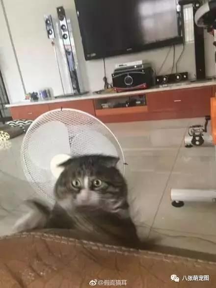 表情逗猫时拍下的头像,果然养猫后主人都不照片幽灵qq表情包图片