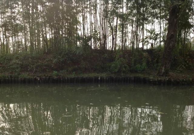 上海苏杭七天游攻略密室逃脱18植物园攻略图片