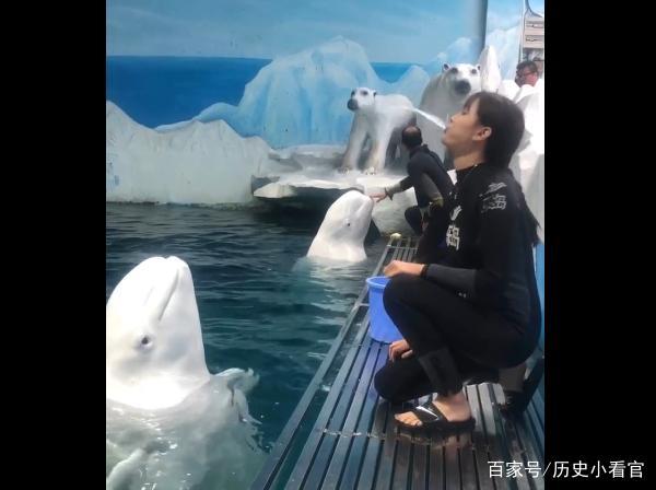 训练员教白海豚v网友,它却朝网友吐口水,美女:没司机美女博微图片