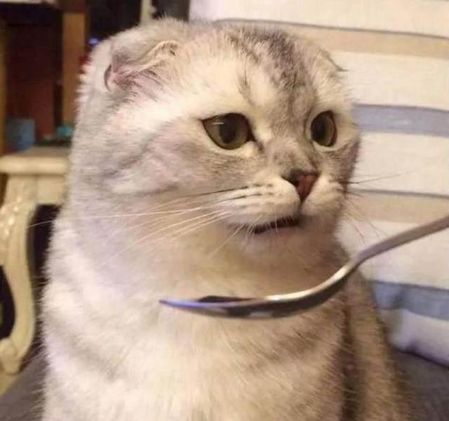 铲屎官给猫咪喂药,勺子母亲节图片表情包甜馨一脸懵逼望着猫咪,随便图片