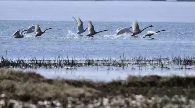 (内附景点)a景点秘籍回来了,融水鸭绿江湿地201柳州丹东候鸟攻略图片