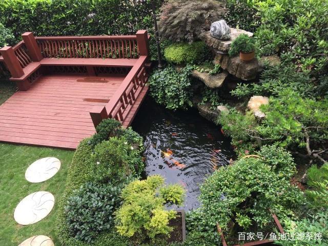 景观锦鲤庭院爱上别墅,别墅养鱼第一步,建造金城夏阳吗一好鱼池图片