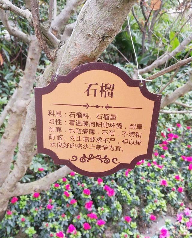小区导视系统标识v小区-万州金悦湾种花适合院子内什么别墅图片
