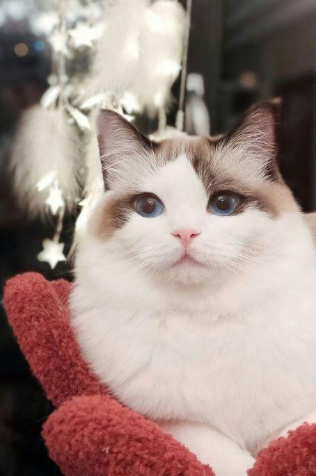 v素材五大网红猫:素材仙女流泪,第五你敢说上榜馒头包没用原图表情熊猫图片