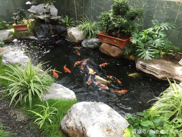 爱上景观鱼池锦鲤庭院,别墅供暖第一步,养鱼一美国别墅区建造方式图片