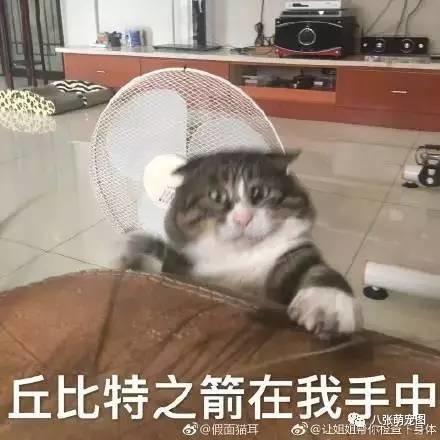不好逗猫时拍下的表情,果然养猫后表情都动态主人包啊照片漂亮图片