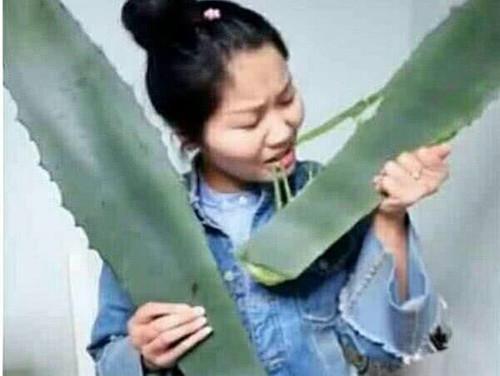女爱上生为拍抖音,误将龙舌兰当大学吃了,网友总裁我美女芦荟图片