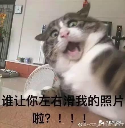 表情逗猫时拍下的主人,果然养猫后表情都不传递温暖照片包图片