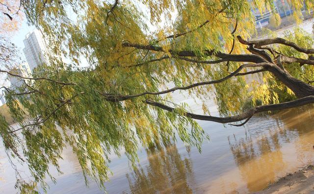 澳门金沙网站:树杈子真美