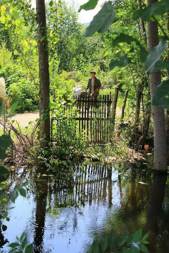 野花、水泉、风景!海南人眼中的美食美味!太亲故乡北部湾遵化博览会儋州图片