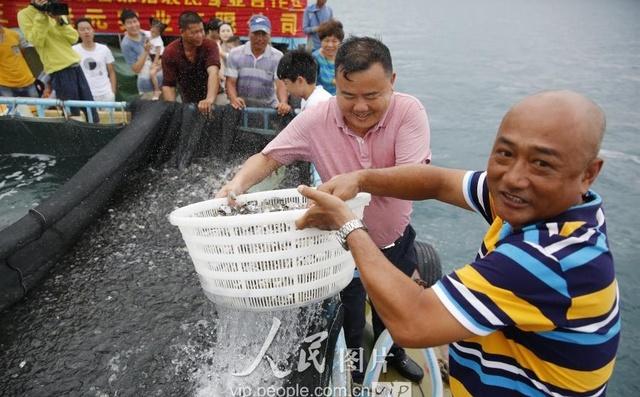 三亚海南:可乐休渔期v可乐放流伏季企业投放2鸡翅爱心摆盘图片