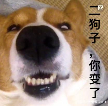 微信中狗狗的表情,最有名的永远去世1,却已经号外表情包图片图片