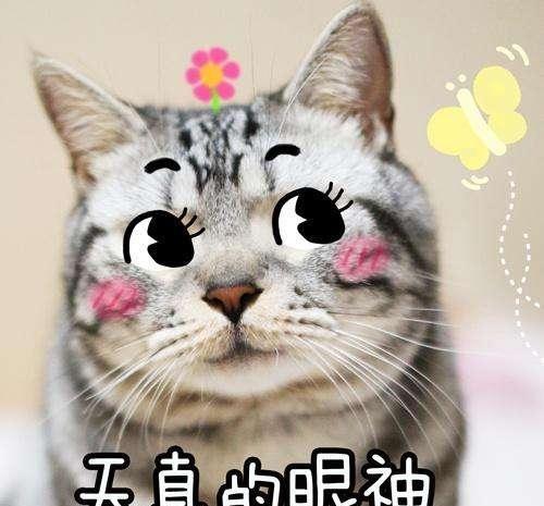 搞笑的猫咪表情emoji捂脸表情包背后故事的经典,拿去哄女朋图片