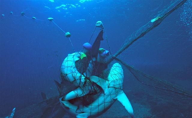 人类遗失的渔网对海洋生物造成伤害竟是如此巨