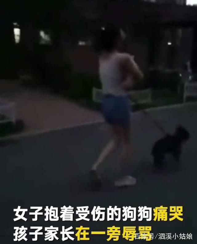 美女遛狗没拴狗绳吓到家长板砖抄内裤把狗砸了掉美女的小孩图片
