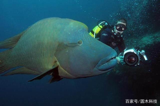 一直很好奇,鱼为什么是睁着眼睛睡觉呢?