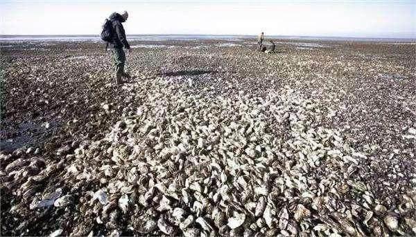 千万只小龙虾入侵加州海滩,这3个国家急需中