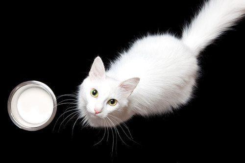 怎样能让瘦猫快速长胖,猫咪怎么吃都不胖怎么办