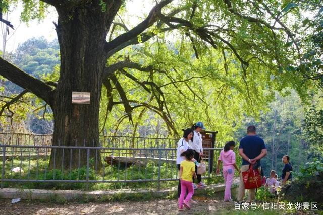 又是重阳节,浓浓敬老情,来灵龙湖赏秋吧!