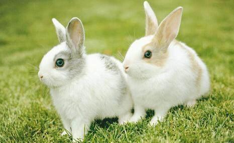 老祖宗的生肖最佳婚配,1987年出生的属兔人是