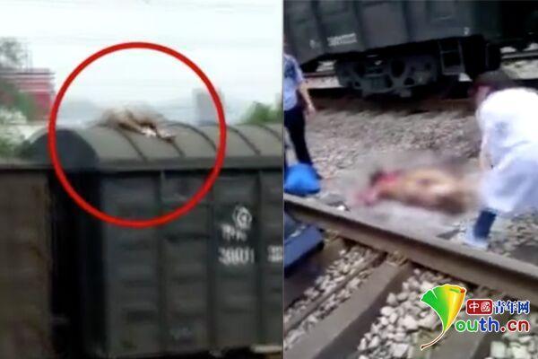 重慶一男子爬火車被高壓電燒傷?知情人:為給顧客拍照片