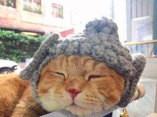 主人给社会猫戴帽子,并道出喵星人常用的经典语录
