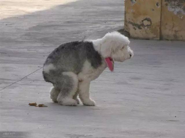 一位日本演员说:中国人没资格养狗,没想到却获