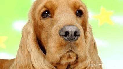 狗狗为什么会哭,大多数有这五种原因,你需要知