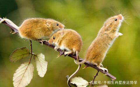 一切皆是命,84年属鼠人的下半生,你认命吧!