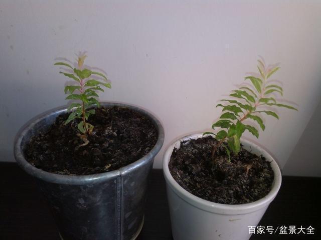 水果种子萌发需要条件,怎么促发芽,这几点要