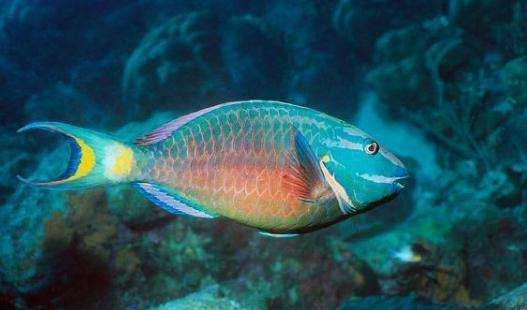 史诗级十万个为什么:鱼为什么睁着眼睛睡觉?