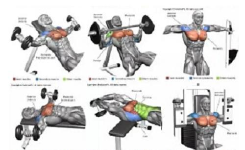 健身图解+动作讲解+运动轨迹,让健身爱好者一