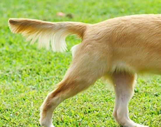 狗叫是一种语言吗?你了解多少?