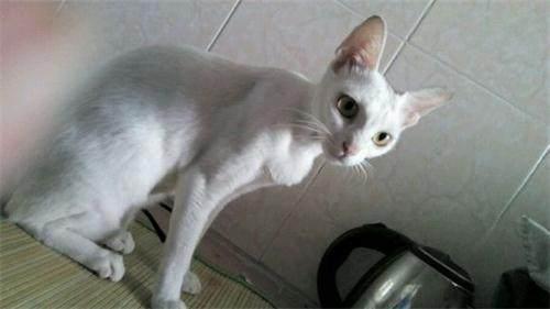 猫咪吃猫粮很瘦怎么办,猫咪吃猫粮很瘦怎么办