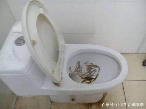 马桶堵了,女子将活泥鳅倒入马桶来通厕所,老公