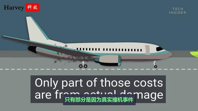 真相:鸟撞飞机引起航班事故的概率只有0.025%