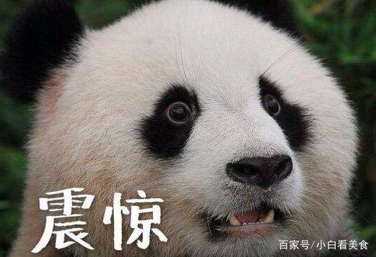 国外动物园养大熊猫得花多少钱?竟贵到这个国