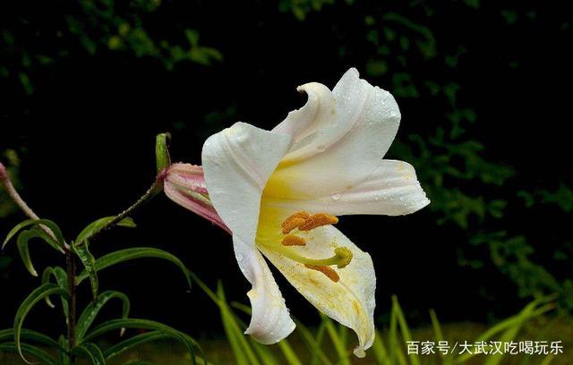 被斌予各种含义的植物们,每个国家送花的讲究